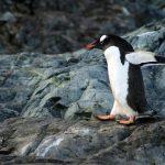 ペンギンアップデートが約2年ぶりに更新されました