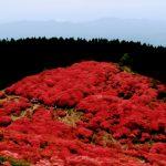 奈良の葛城山のツツジを見に登山をしてきました
